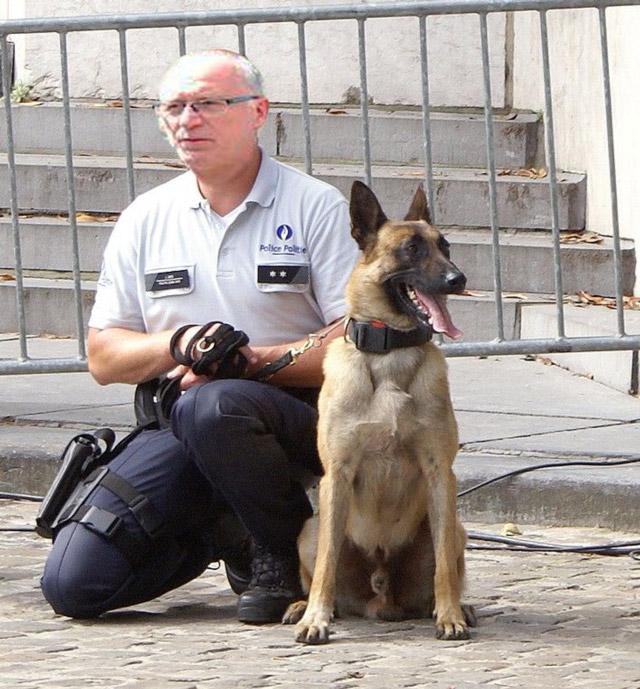 brigade-canine-buek